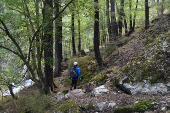 7 Forest walkJPG